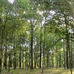 Волынских лесов стало больше на 50 гектаров