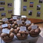 Для сельхозпроизводителей выделят 40% торговых площадей