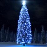 На Волыни разрешено срубить 200 тысяч елок