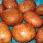Школы Луцкого района заготовили 17 655 килограммов картофеля