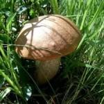 На Волыни грибами отравился 2-летний ребенок