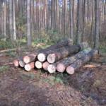 Экспортеров леса на Волыни уменьшилось вдвое