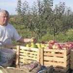 Сад будет приносить доход, если решить проблему сбыта яблок
