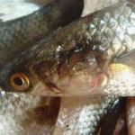 Госэкоинспекция оштрафовала 21 нарушителя за незаконный вылов рыбы