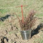 На Волыни заготовили 424 кг элитных семян деревьев