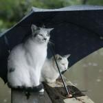 Чтобы защитить Волынь от паводков, правительство дало более 22 миллионов