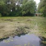 В Локачах назревает экологическая катастрофа