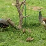 В Луцком зоопарке пополнение в пернатых